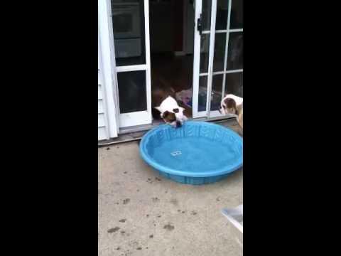 這隻狗狗太愛他的游泳池了,到哪裡都一定要帶著走…但想要拖到家裡時我就笑垮了!