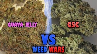 WEED WARS: Guava Jelly vs GSC by Urban Grower