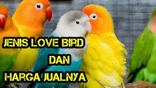 Video Macam - Macam Love bird dan Harganya MP3, 3GP, MP4, WEBM, AVI, FLV September 2018
