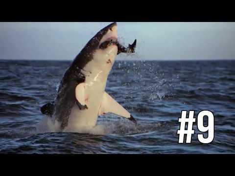 Top 10 Jumping Sharks!  Shark Breaches!  Shark Week