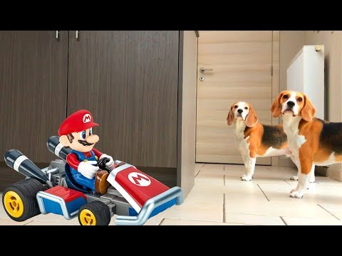 the beagle vs super mario