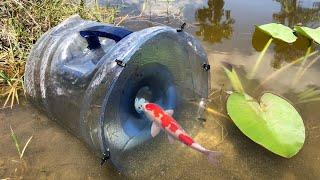 Video MEGA FISH TRAP Catches Rare Colorful Fish MP3, 3GP, MP4, WEBM, AVI, FLV Juli 2019