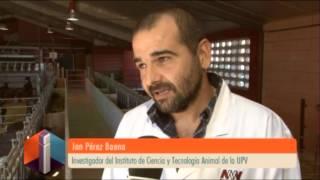 Video Noticias Destacadas: Cruces con raza Boer [2013-11-07] -- UPV MP3, 3GP, MP4, WEBM, AVI, FLV November 2017