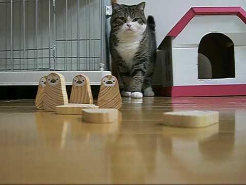 「ボーリングが気になっちゃうネコ」のイメージ