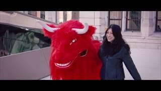 Furry The Bull