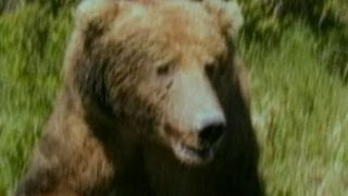 Video Hiker Photographs Grizzly Bear Just Before Deadly Attack MP3, 3GP, MP4, WEBM, AVI, FLV Mei 2017