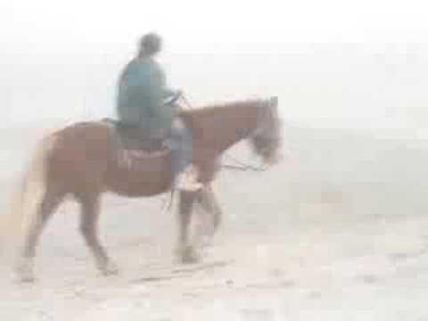 Horseback Riding on Cedar Island, NC
