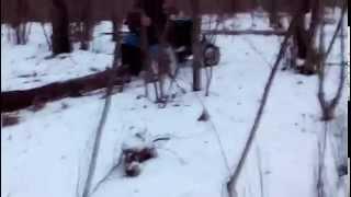 Мини трактор из мотоблока Работа в лесу