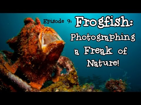 Frogfish: Photographing a Freak of Nature! | Borneo from Below (S01E09)