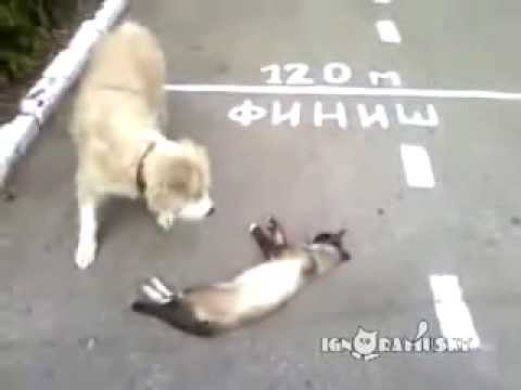 funny video - cat pretends to be dead!