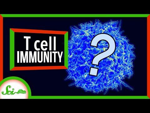 Covid-19 and T-Cells. Are We Already Immune?