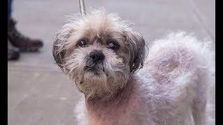 LIVE: Adoptable Dog in New York City - CODY | The Dodo Live - ADOPT THIS DOG by The Dodo