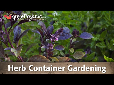 Container Gardens—Herbs