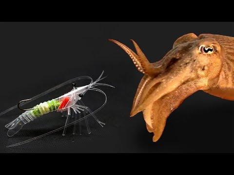 Cuttlefish fishing  with homemade straw shrimp (빨대새우로 갑오징어낚시)