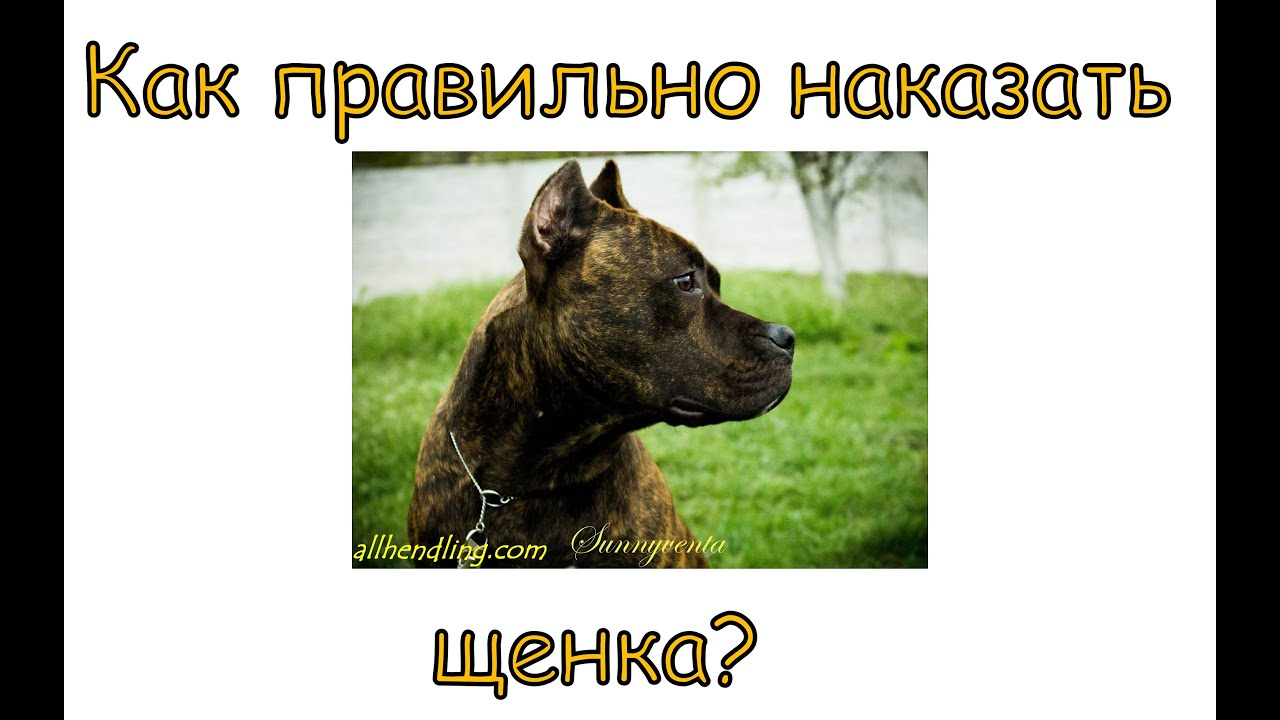 Смотреть онлайн: Как правильно наказывать щенка?