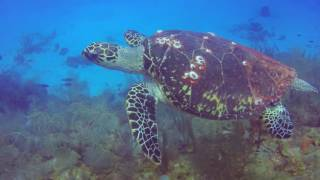 Diving Belize!