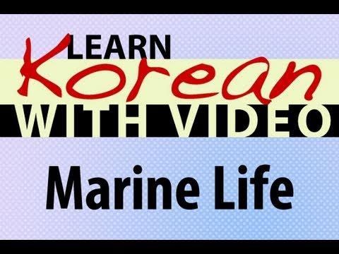 Die See - Koreanische Vokabeln