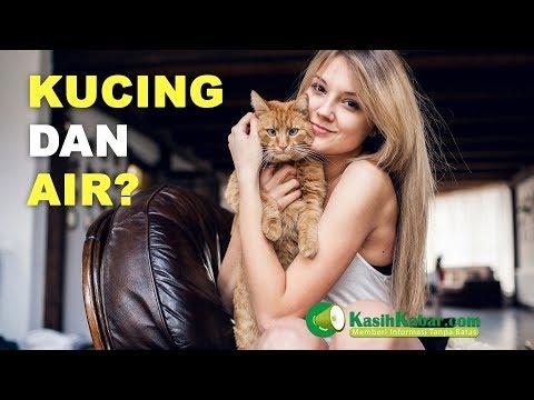 Tahukah kamu Kenapa Kucing takut dengan Air ?