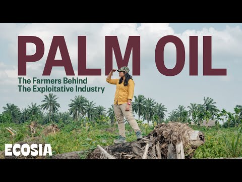 Why Boycotting Palm Oil Is not a Solution