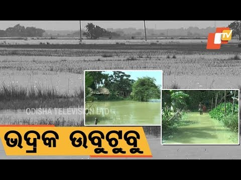 Video 92 panchayats, acres of land marooned due to heavy rainfall in Bhadrak download in MP3, 3GP, MP4, WEBM, AVI, FLV January 2017