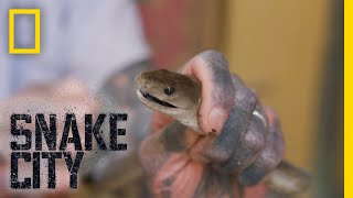 Black Mamba in the Fridge | Snake City by Nat Geo WILD