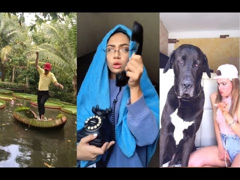 Funny videos - Funny TikTok Videos Compilation (P3) #funny #meme #ironic