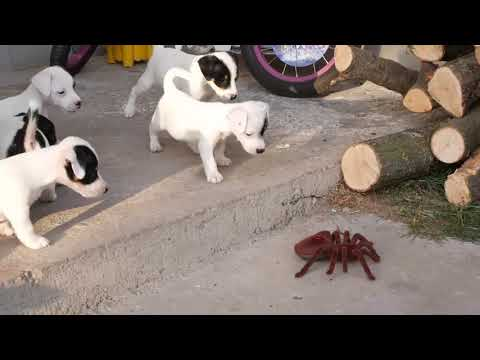 Funny animals - TRY NOT TO LAUGH  Funny & Cute Animals Compilation January 2019 P.5 Funny InstaVID