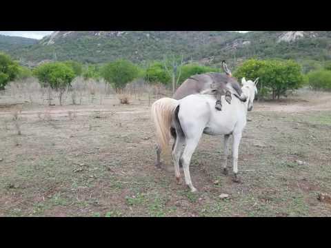 Video A égua download in MP3, 3GP, MP4, WEBM, AVI, FLV January 2017