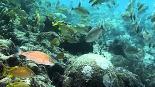 Dives with Grand Bahia Principe Esmeralda give club - July 2014