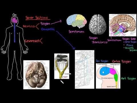 Bilim Olarak Psikolojinin Yapısı, Nesne ve Konusu