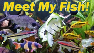 Feeding my Freshwater Fish! by Snake Discovery
