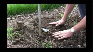 http://gurneys.com/grape-vines/c/65/ - In this video, Felix from Gurney's demonstrates how to plant grape vines. Self-pollinating...