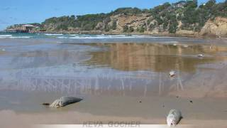 Tathra Australia  city pictures gallery : Mass fish deaths, Tathra Beach, Australia - by Keva Gocher