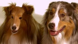 Community Trust Bank Commercial! Featuring Otto, Apollo, Whimsey, Lunchbox, ChaCha & Scout!!