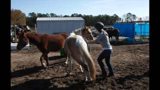 Teen Works Though Pain by Taming Horses