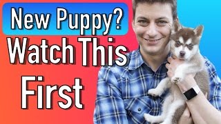 Everything you Need to be Prepared for your New Puppy!
