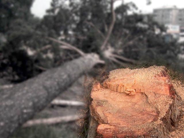Война за деревья