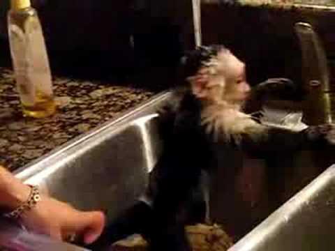 Monkey takes a bath