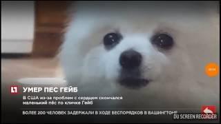 Пёс Гейб умер!😭😭😭😭😢😢😢😢