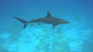 preview picture of video 'Shark Week - Scuba Diving - Exuma Bahamas'