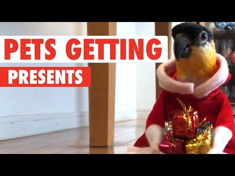 Pets Opening Christmas Presents 2017