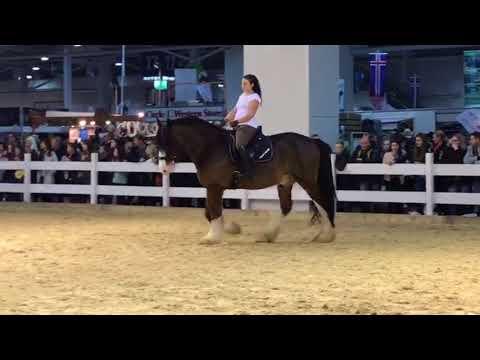 Pferd & Jagd 2. Tag