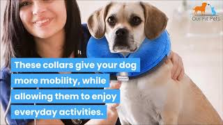 """8 Alternatives To The """"Cone of Shame"""" For Dogs"""