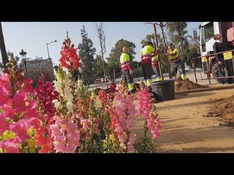 Parques y Jardines planta 4.300 árboles en la ciudad