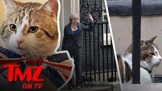 Larry The Cat! | TMZ TV