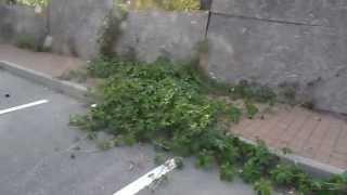 preview picture of video 'ecologia e sicurezza a lodi vecchio, una meraviglia.'