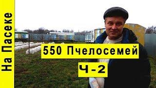 Промышленная пасека 550 пчелосемей, Сергей Величко На пасеке #2