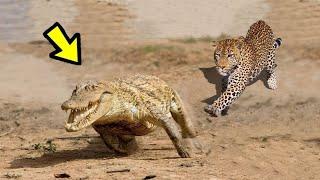 LA LEY DEL MÁS FUERTE | E.p 31 | 10 Peleas De Animales Captados en CÁMARA