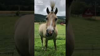 Cute And Funny Horse Tik Tok Compilation🐎❤