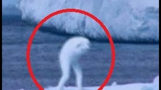 Real Easter Bunny Caught On Tape?